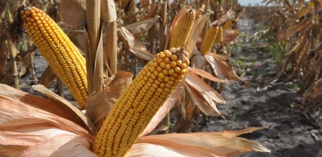 Same Difference: Monsanto vs. EA