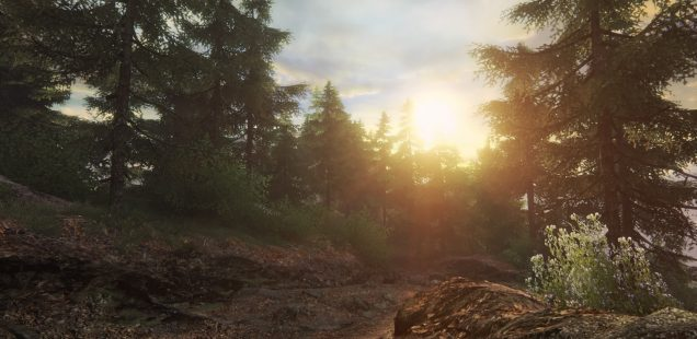 Let's Place: The Forest With No Trees